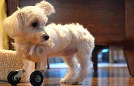 cachorrosempata1