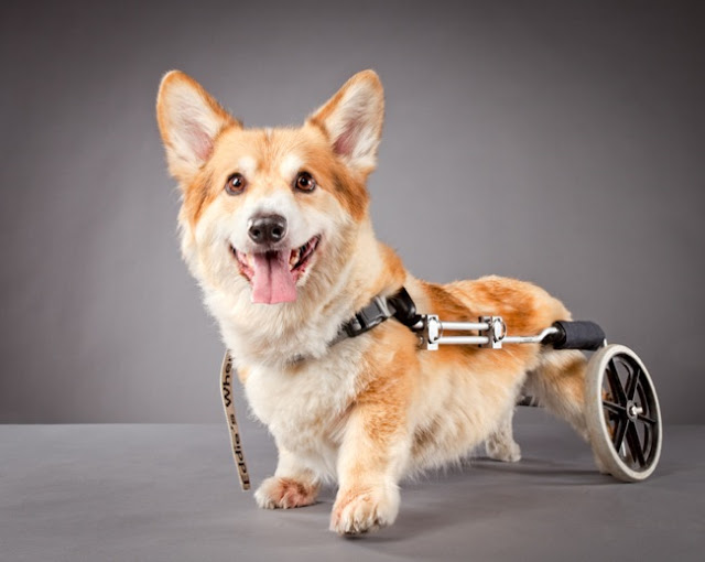 pets-with-disabilities-Carli-Davidson